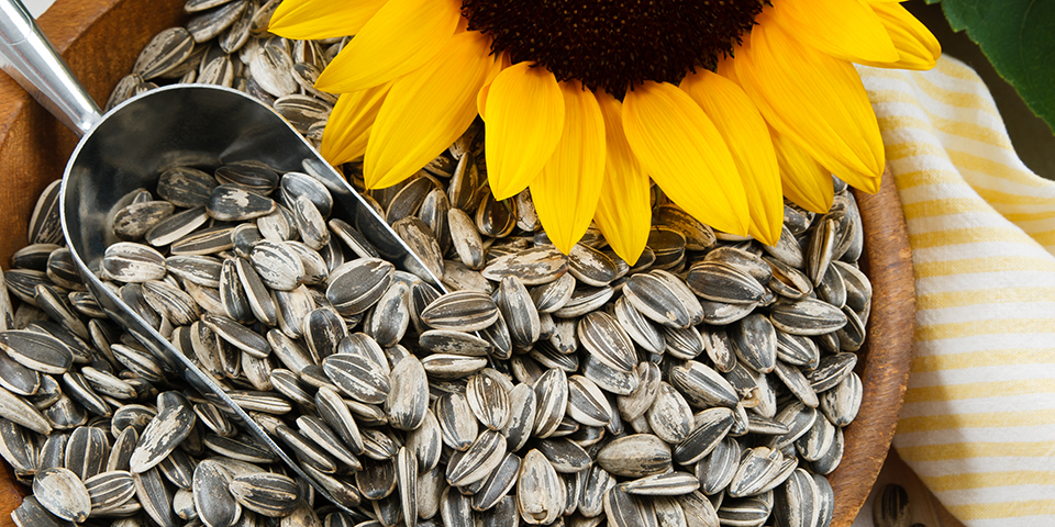 Are Sunflower Seeds Healthy? Get the 411